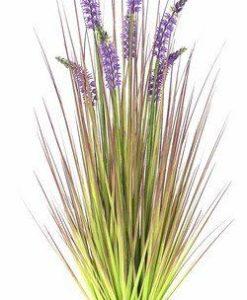 trawa lavender